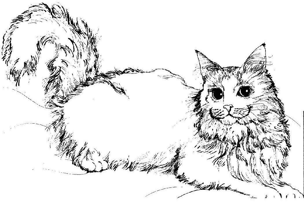 Free Printable Cat Coloring Pages For Kids   Adult Coloring Pages - Free Printable Cat Coloring Pages