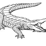 Free Printable Crocodile Coloring Pages For Kids | Ms | Coloring   Free Printable Pictures Of Crocodiles