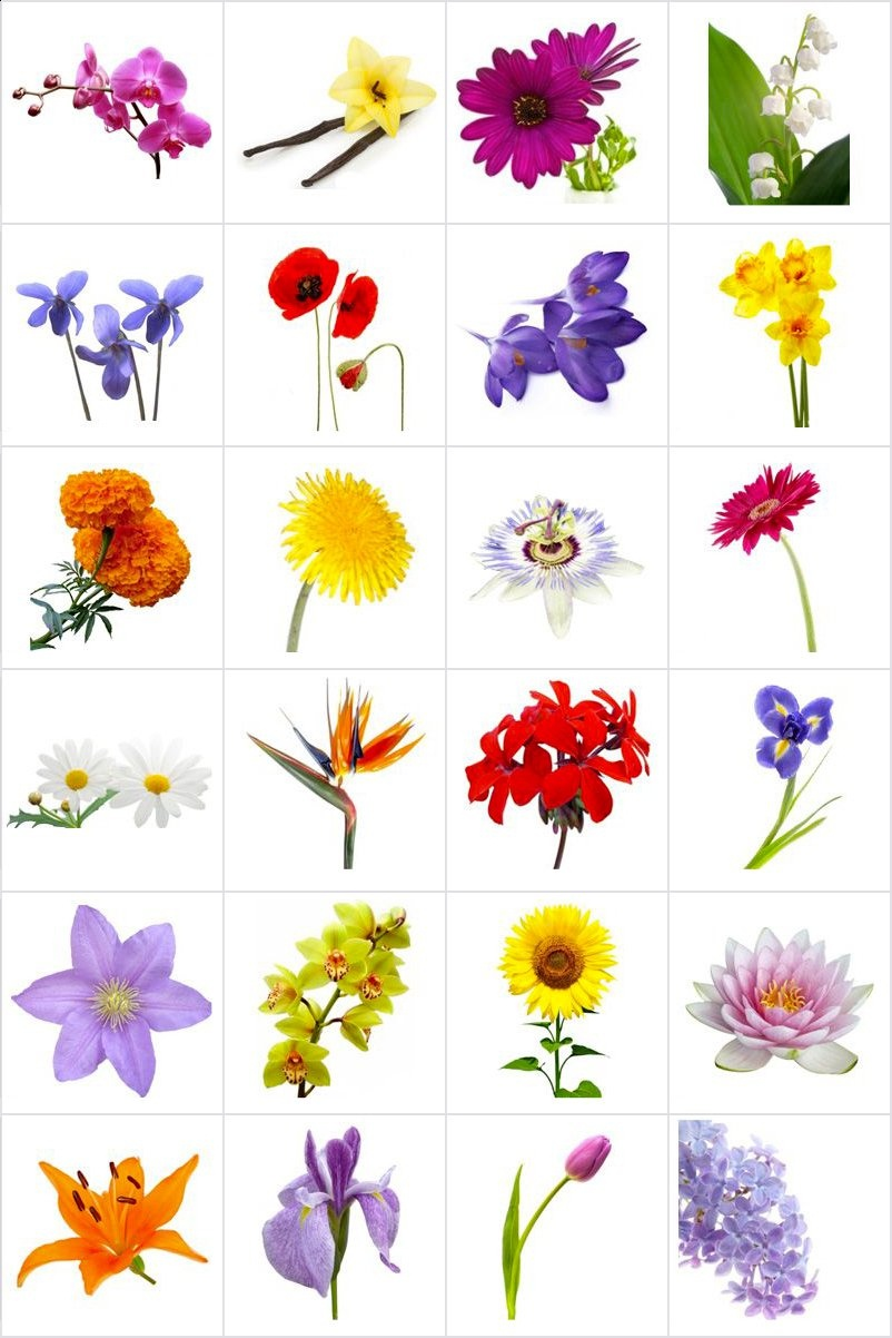 Free Printable Memory Game For Seniors - Flowers - Print And Cut Out - Free Printable Flowers