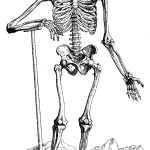 Free Printable Skeleton Coloring Pages For Kids   Free Printable Skeleton Coloring Pages