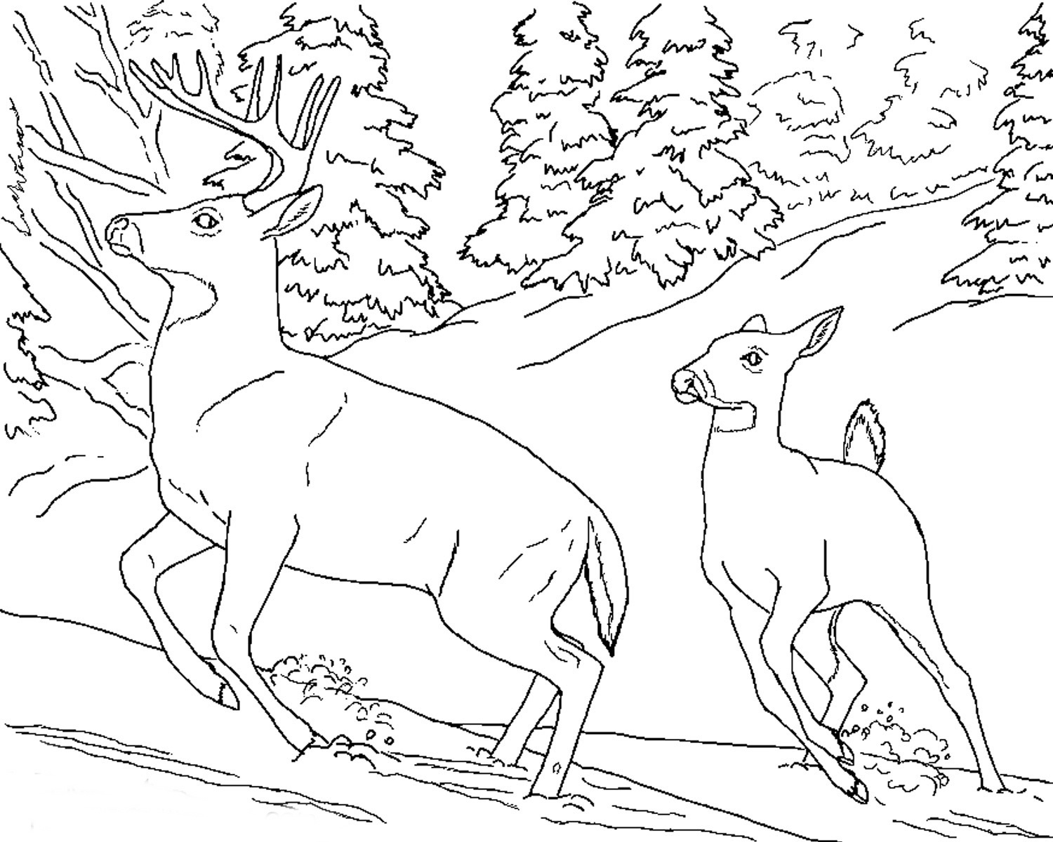 Free Realistic Animal Coloring Pages   Realistic Animal Coloring - Free Printable Realistic Animal Coloring Pages