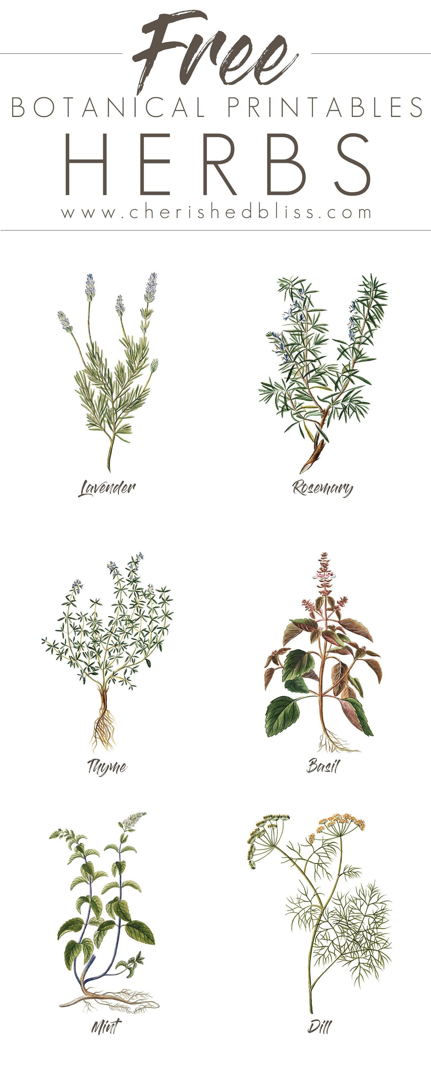 Free Set Of 6 Spring Herb Printables | Crafts | Diy Home Decor, Diy - Free Printable Pictures Of Herbs