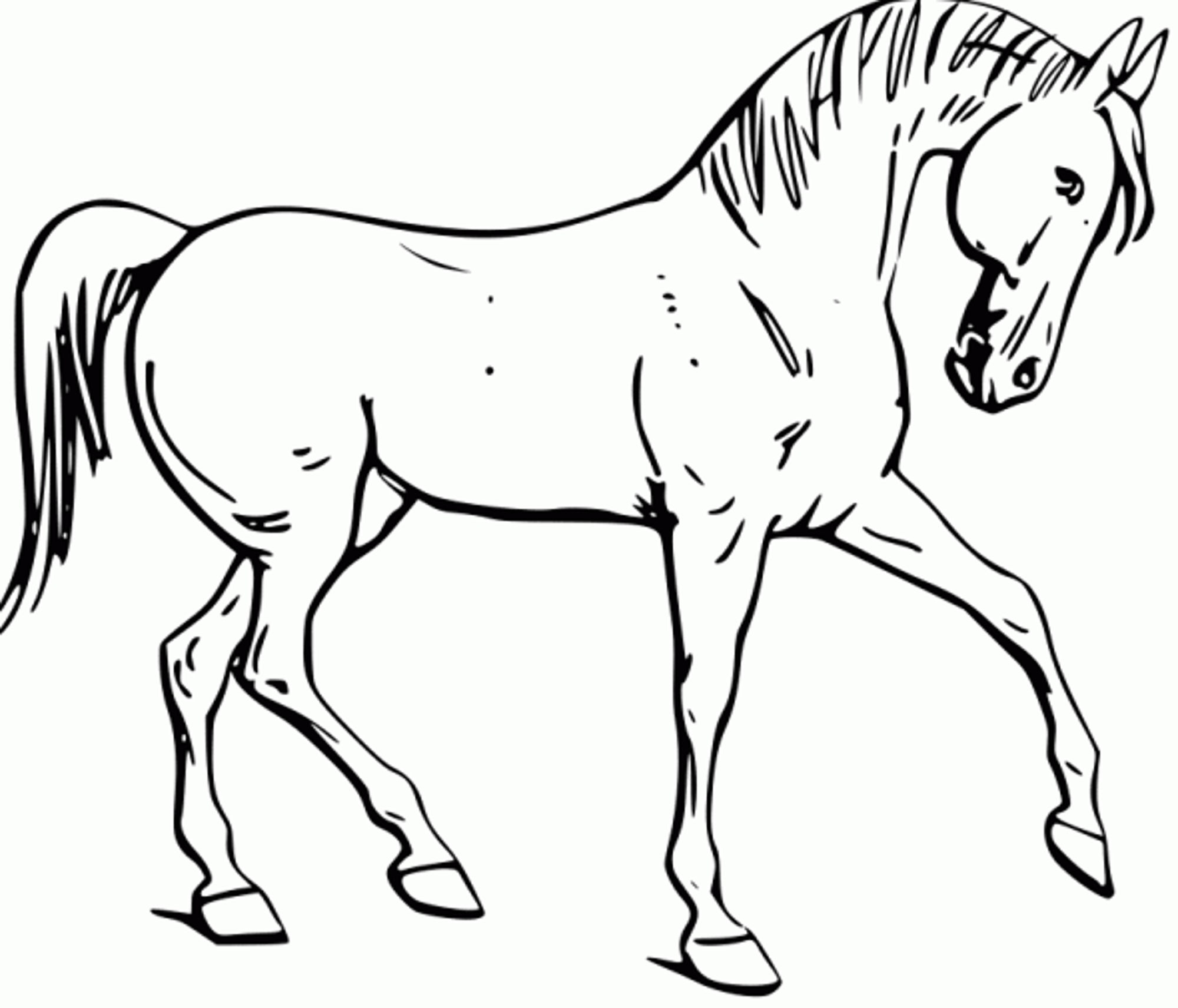 Fun Horse Coloring Pages For Your Kids Printable - Free Printable Horse Coloring Pages