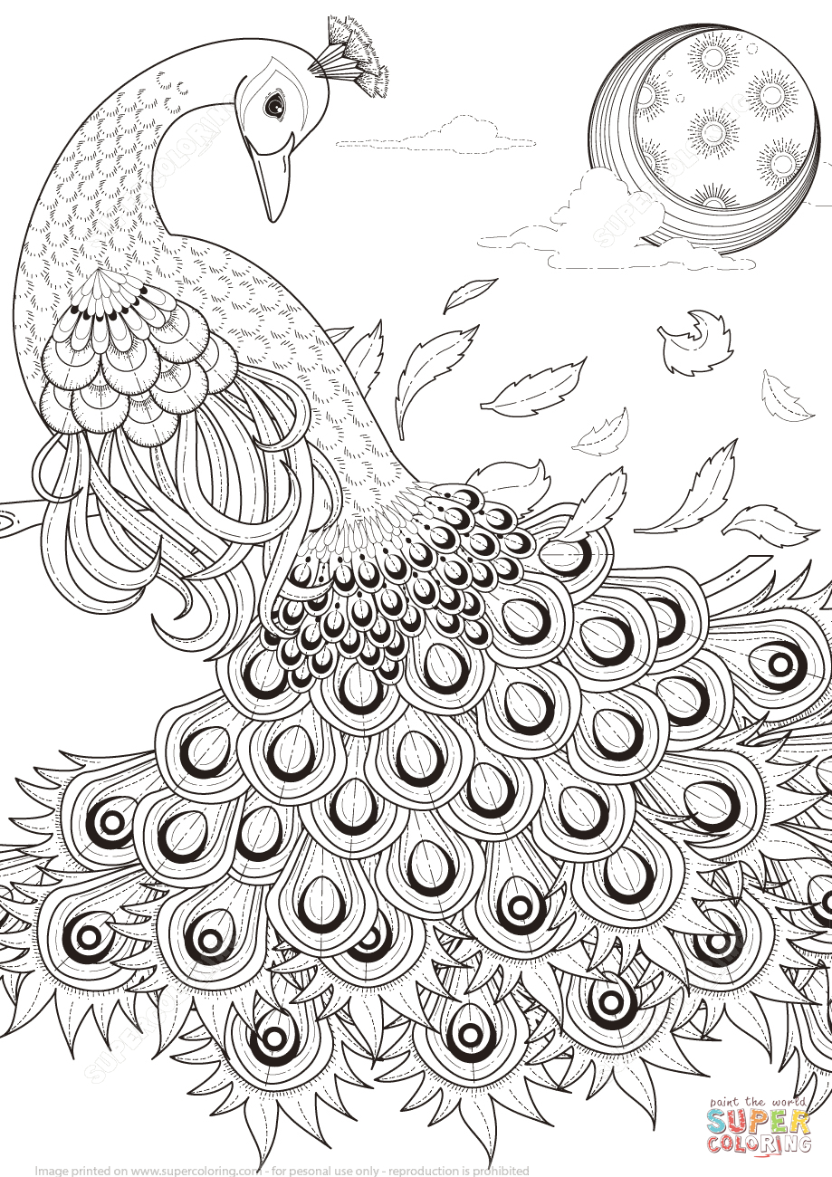 Graceful Peacock Coloring Page   Free Printable Coloring Pages - Free Printable Peacock Pictures