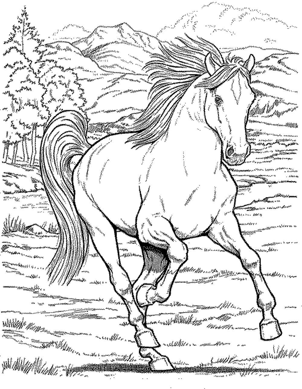 Horse Coloring Pages For Girls - Printable Kids Colouring Pages - Free Printable Realistic Horse Coloring Pages