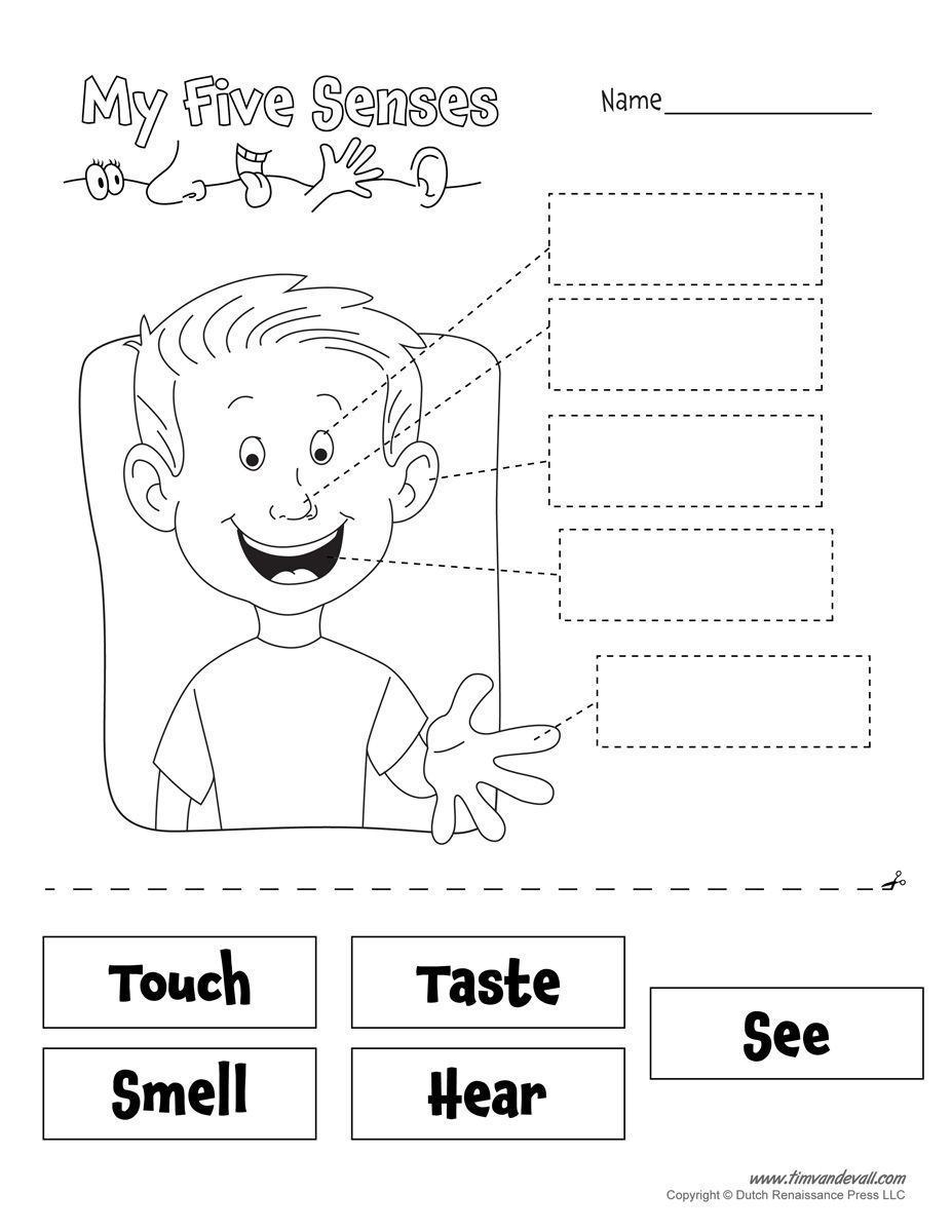 Image Result For 5 Senses Preschool Printables | School Ideas - Free Printable Worksheets Kindergarten Five Senses
