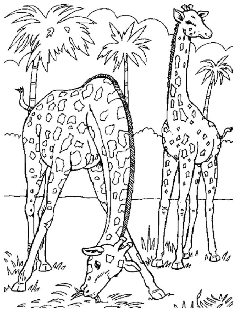 Image Result For Realistic Animal Coloring Pages For Adults   Kids - Free Printable Realistic Animal Coloring Pages