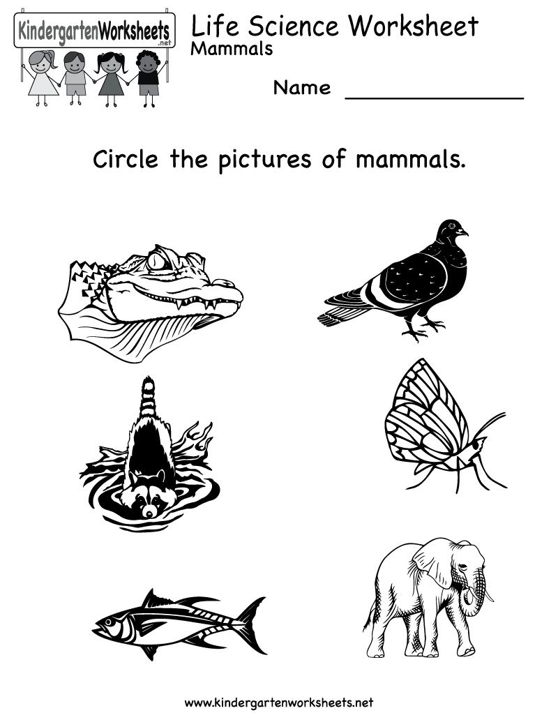 Kindergarten Life Science Worksheet Printable   Worksheets (Legacy - Free Printable Worksheets For Kids Science