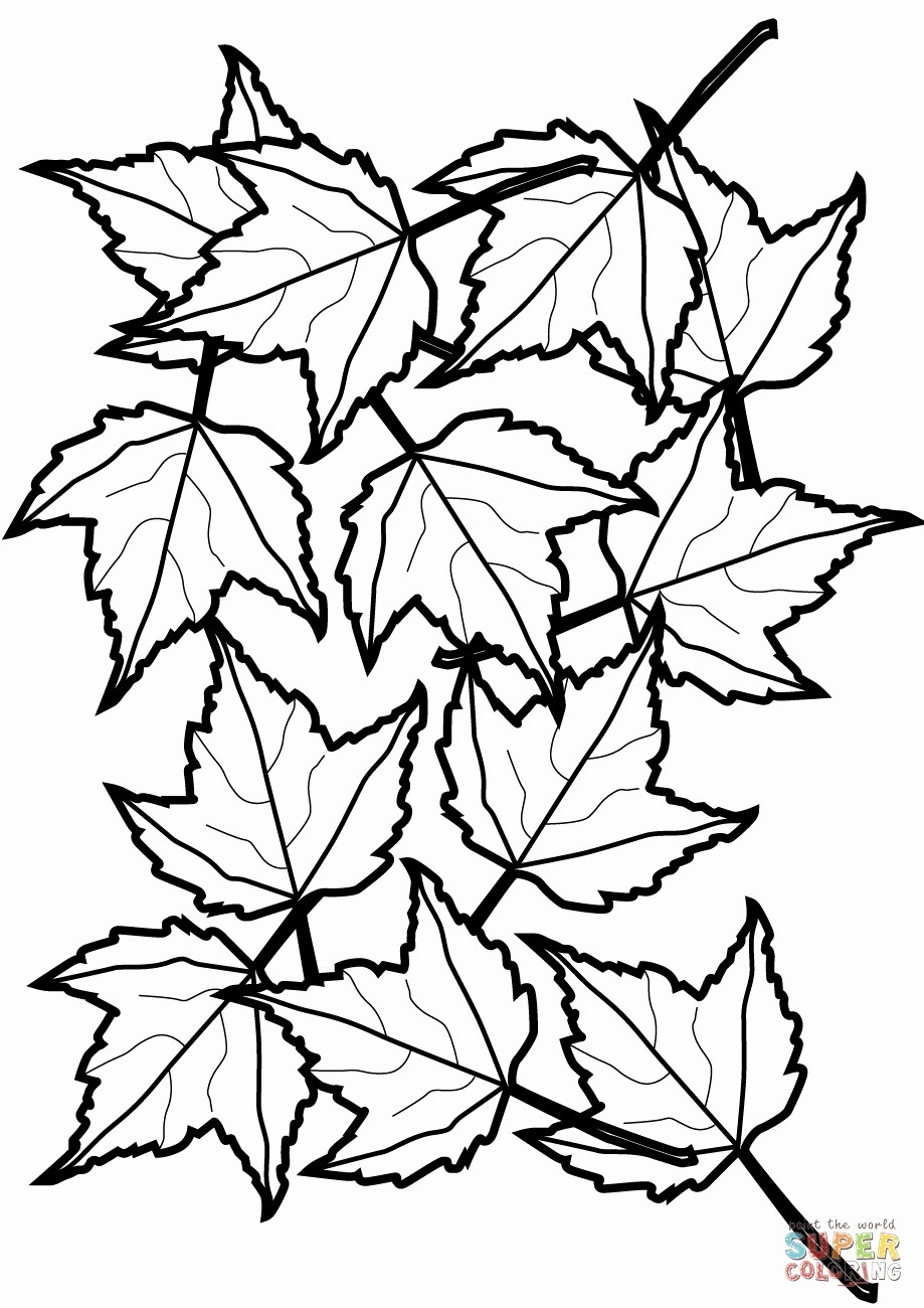 Leaf Coloring Page Cooloring Book Fall Leaves Coloring Sheet Free - Fall Leaves Pictures Free Printable