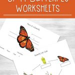 Life Cycle Of A Butterfly Worksheets   Free Printable Butterfly Worksheets