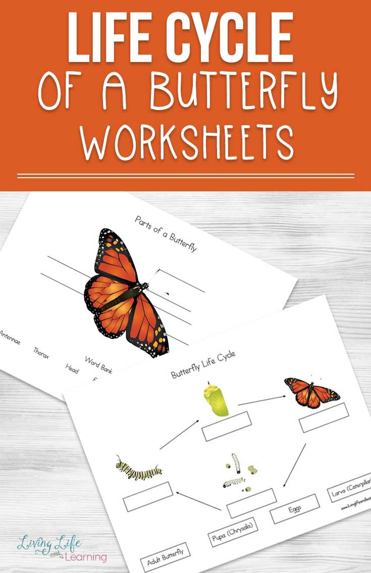 Life Cycle Of A Butterfly Worksheets - Free Printable Butterfly Worksheets