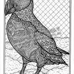 Outlines Of Australian Animals   Kaza.psstech.co   Free Printable Arty Animal Outlines