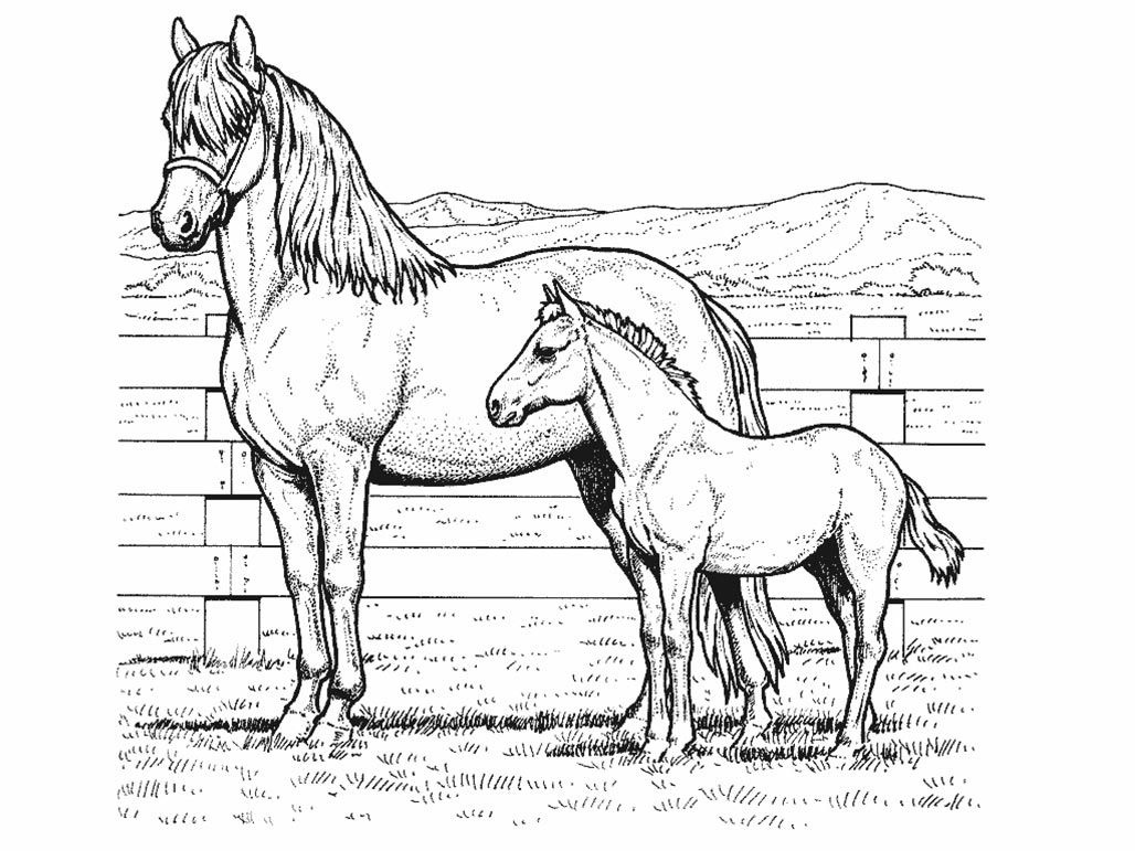 Pin De Julia En Colorings | Horse Coloring Pages, Coloring Pages Y - Free Printable Realistic Horse Coloring Pages