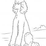 Poodle | Super Coloring | Dog Patterns | Dog Coloring Page, Poodle   Free Printable Poodle Template