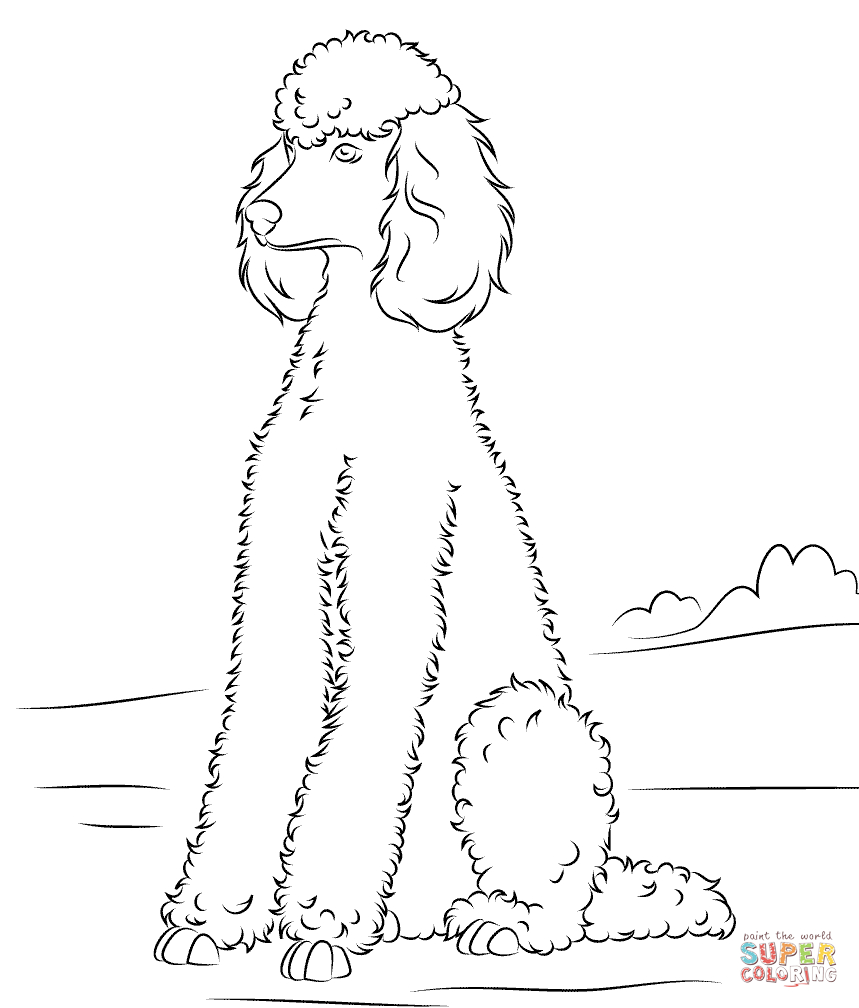Poodle | Super Coloring | Dog Patterns | Dog Coloring Page, Poodle - Free Printable Poodle Template
