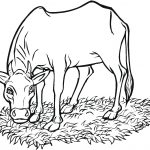Printable Cow Coloring Pages | Coloringme   Coloring Pages Of Cows Free Printable