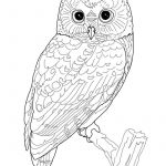 Printable Owl Coloring Page | Coloring Pages Owl (Birds > Owl   Free Printable Owl Coloring Sheets