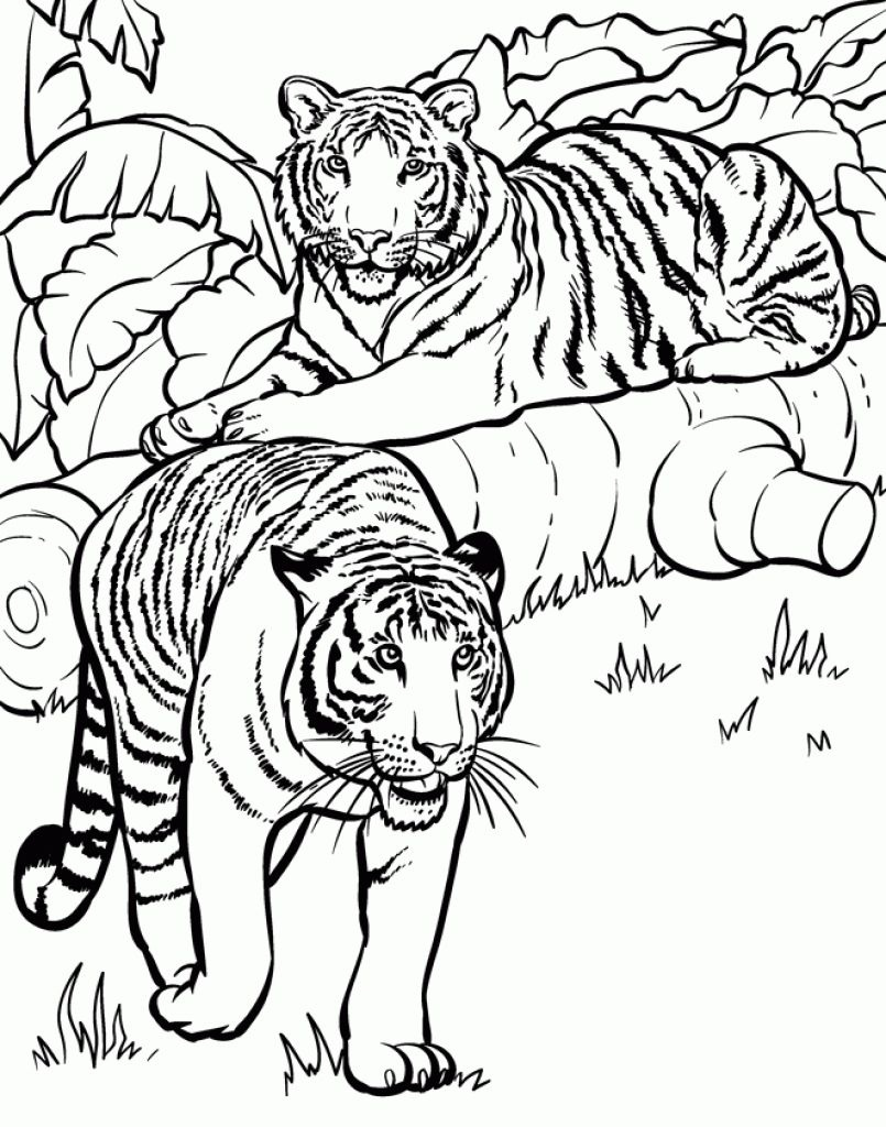 Realistic And Detailed Coloring Page Of Tiger For Older Kids - Free Printable Realistic Animal Coloring Pages
