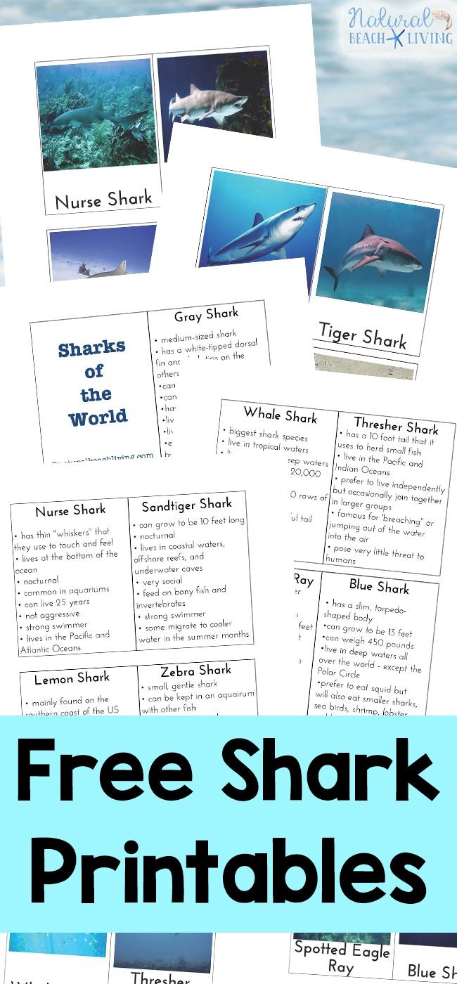 Shark Information For Kids - Free Shark Printables - Natural Beach - Free Shark Printables