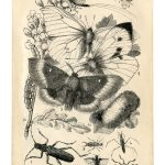 Vintage Printable Things With Wings   The Graphics Fairy   Free Vintage Printables