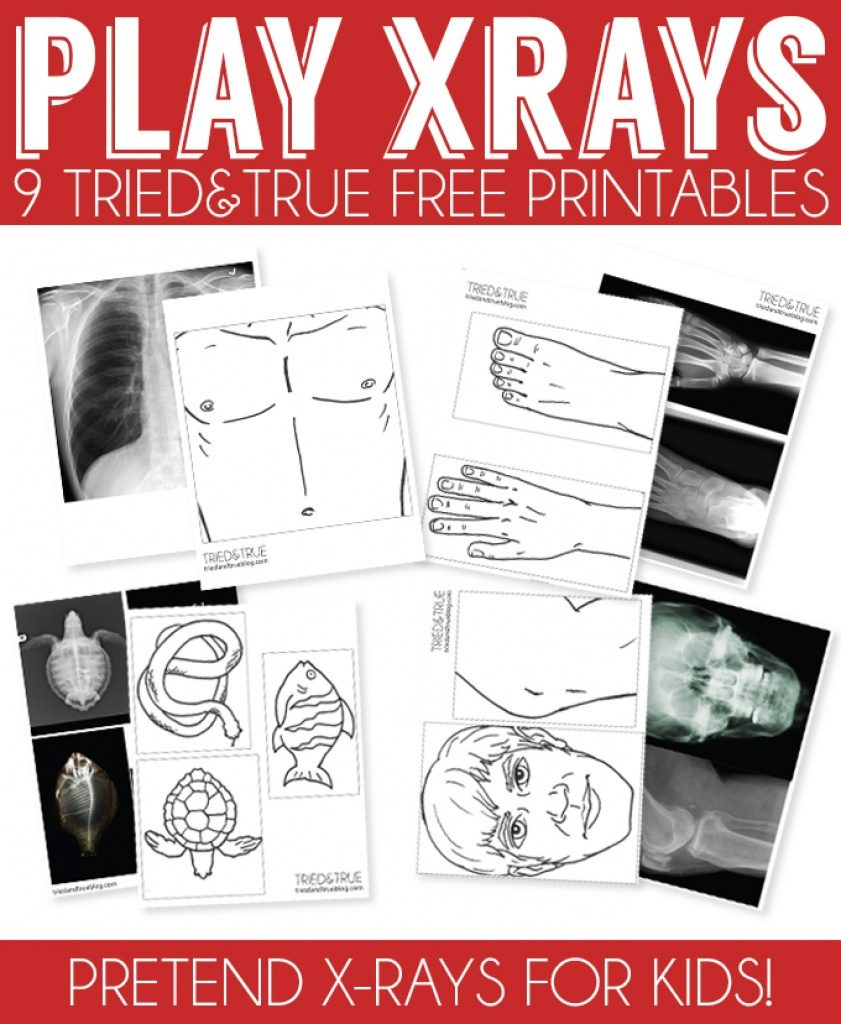 X Ray Drawing Kindergarten At Paintingvalley   Explore - Free Printable Animal X Rays