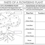 Year 3 Science: Parts Of A Plant Worksheetbeckystoke | Teaching   Free Plant Life Cycle Worksheet Printables