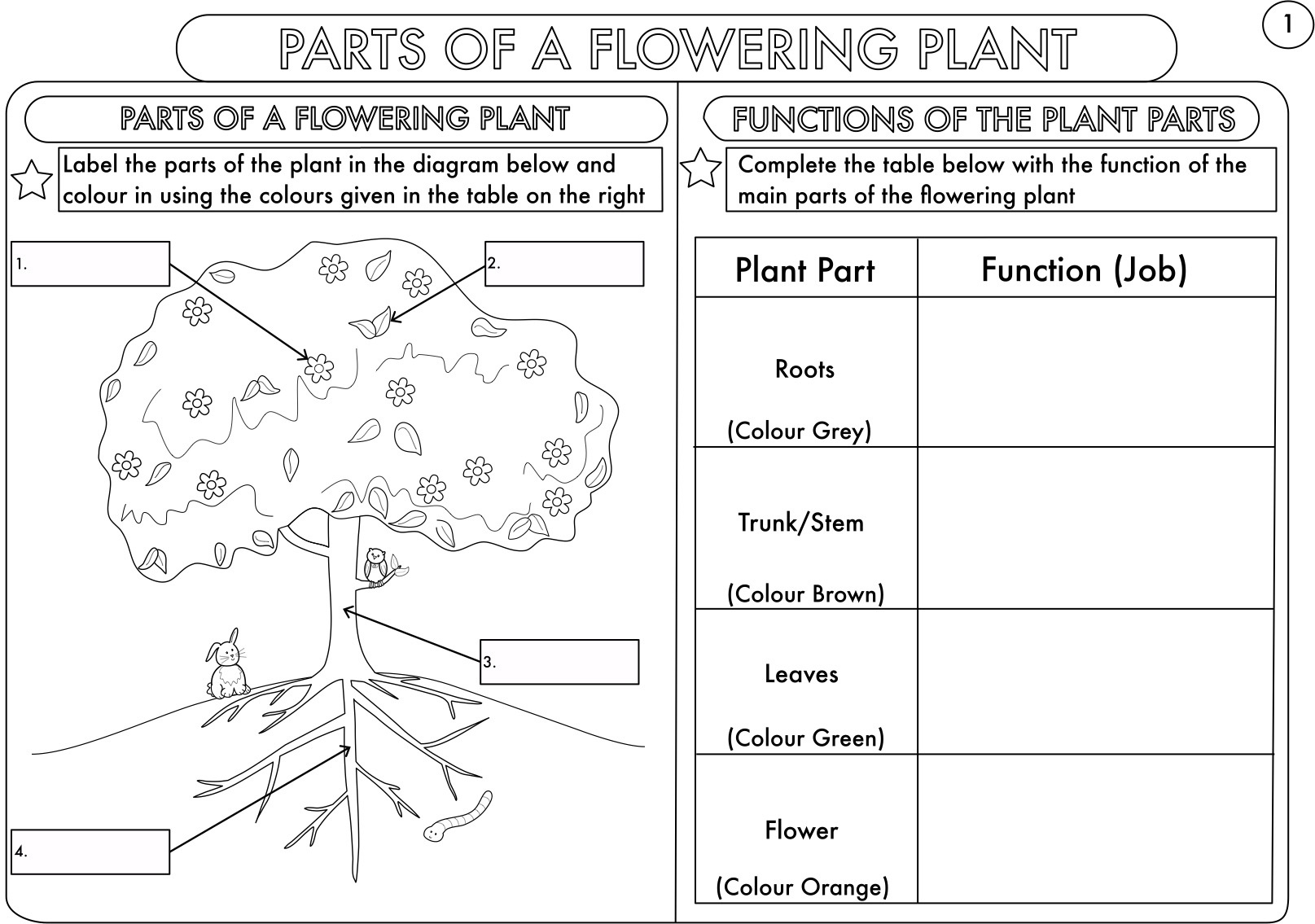 Year 3 Science: Parts Of A Plant Worksheetbeckystoke | Teaching - Free Plant Life Cycle Worksheet Printables