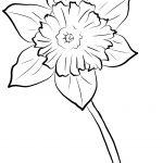 Yellow Daffodil Coloring Page | Free Printable Coloring Pages   Free Printable Pictures Of Daffodils