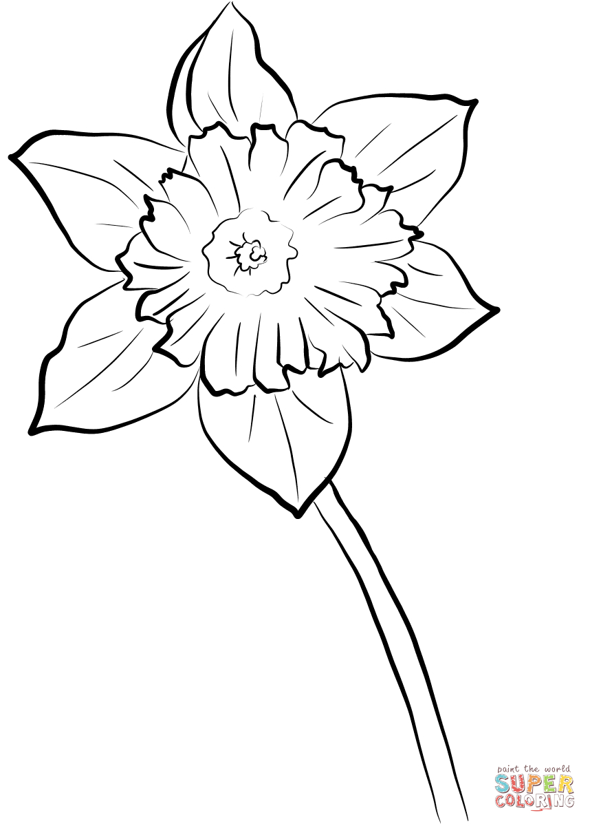 Yellow Daffodil Coloring Page | Free Printable Coloring Pages - Free Printable Pictures Of Daffodils
